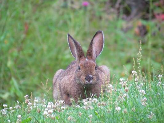 photo of rabbit in wild