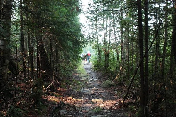 photo of hikers on sun-dappled forest trail