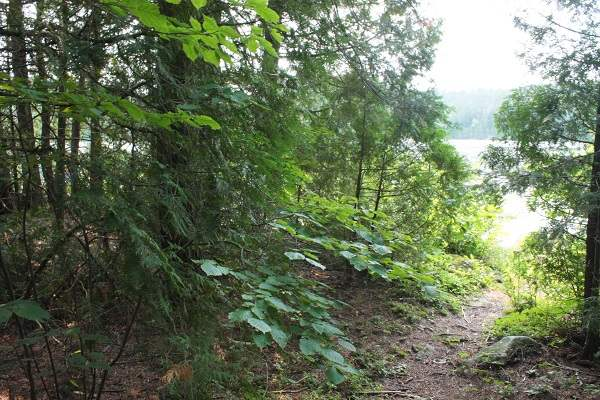 photo of hiking trail leading through woods to lake