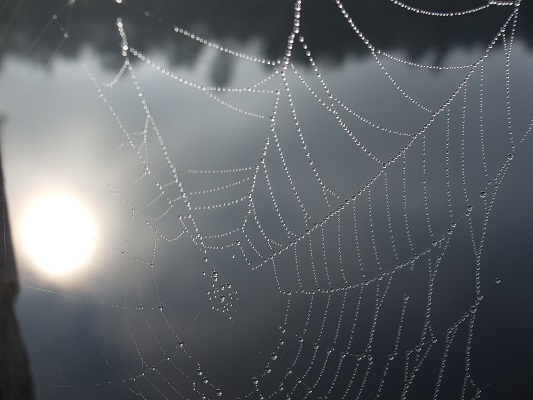 Photo of spider's web jewelled with dewdrops