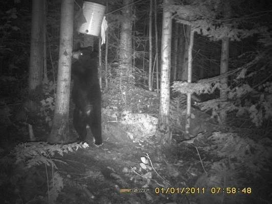 photo of black bear on hind legs at night