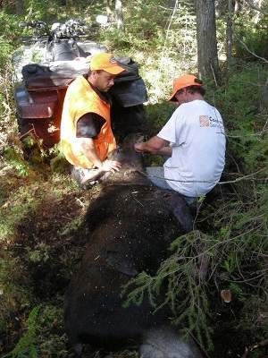 photo of two men in bush with harvested moose