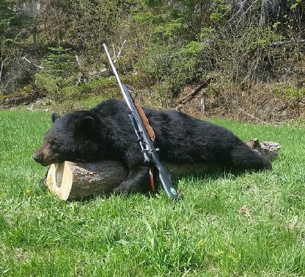 photo of harvested black bear and rifle