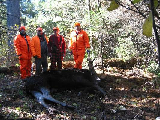 photo of four men with harvested moose